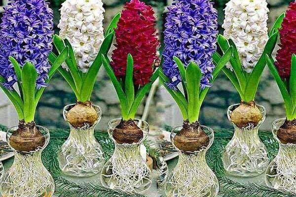 4 cay phong thuy trong khong can nuoc, cang xanh tuoi gia chu cang giau-Hinh-2