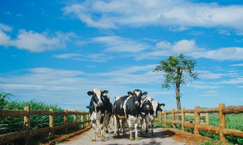 Beauty blogger hannah nguyen hao huc voi Vinamilk organic farm tour-Hinh-4
