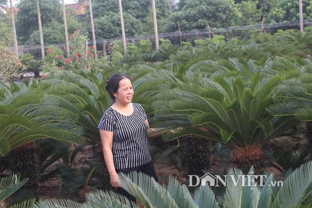 Trong 700 cay van tue, goa phu dem la thu tien-Hinh-2