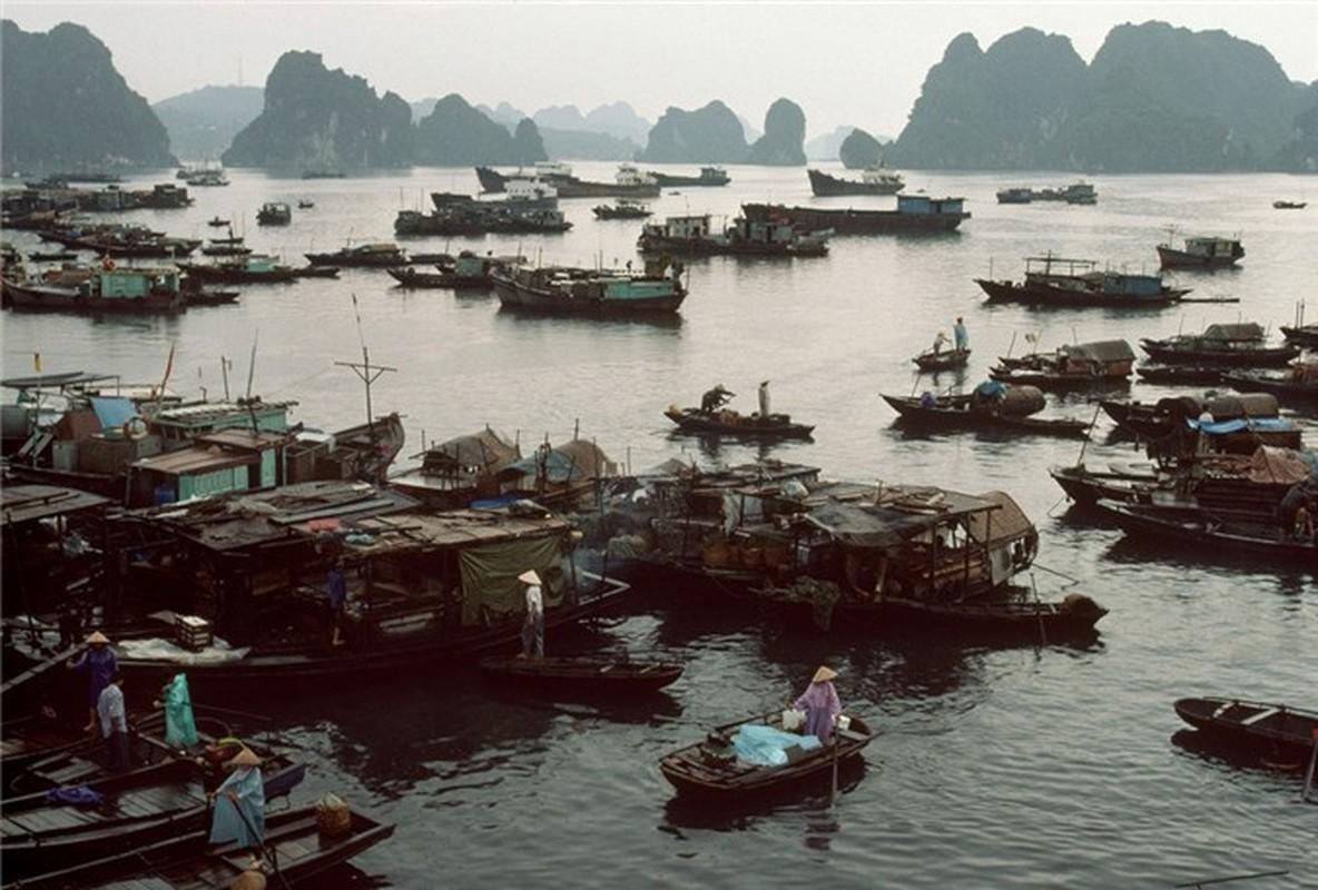 Nhip song hoi ha o Quang Ninh nam 1994-1995-Hinh-3