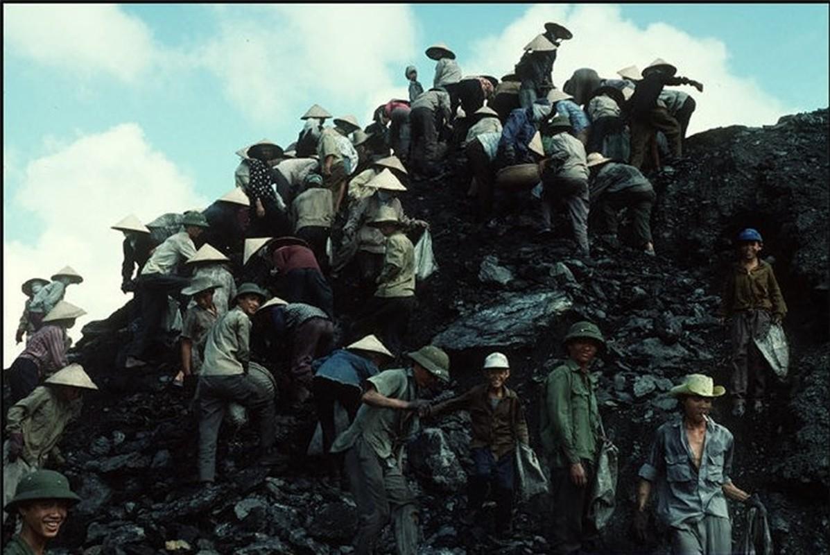 Nhip song hoi ha o Quang Ninh nam 1994-1995-Hinh-7