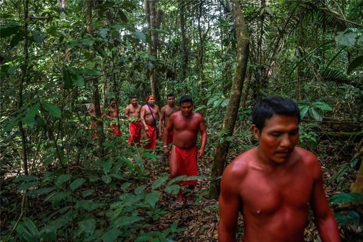 Bi an bo lac biet lap o tan sau trong rung ram Amazon-Hinh-4