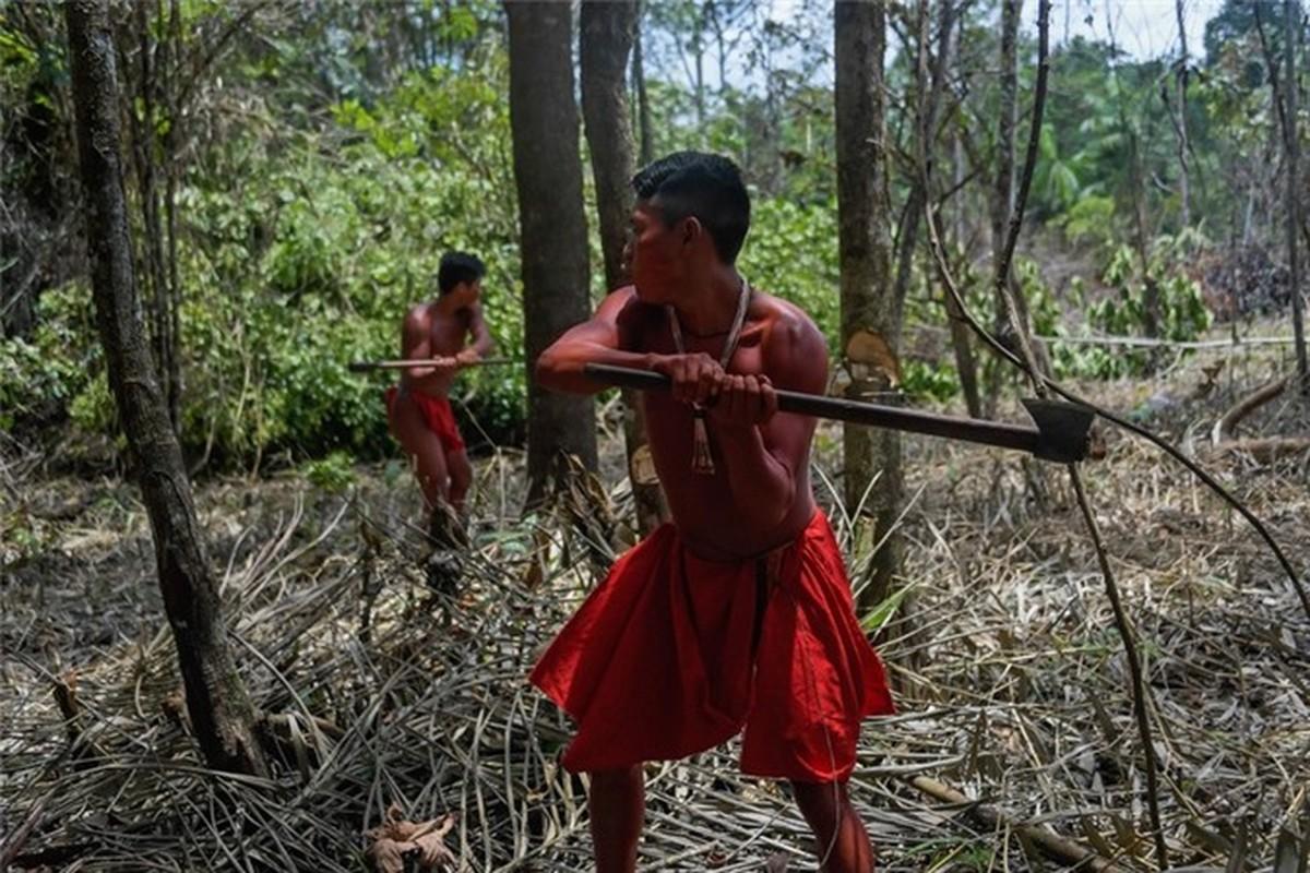 Bi an bo lac biet lap o tan sau trong rung ram Amazon-Hinh-5