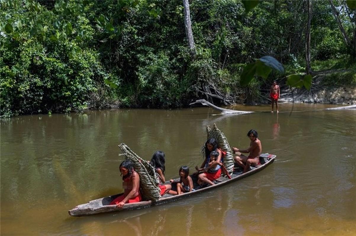 Bi an bo lac biet lap o tan sau trong rung ram Amazon-Hinh-9