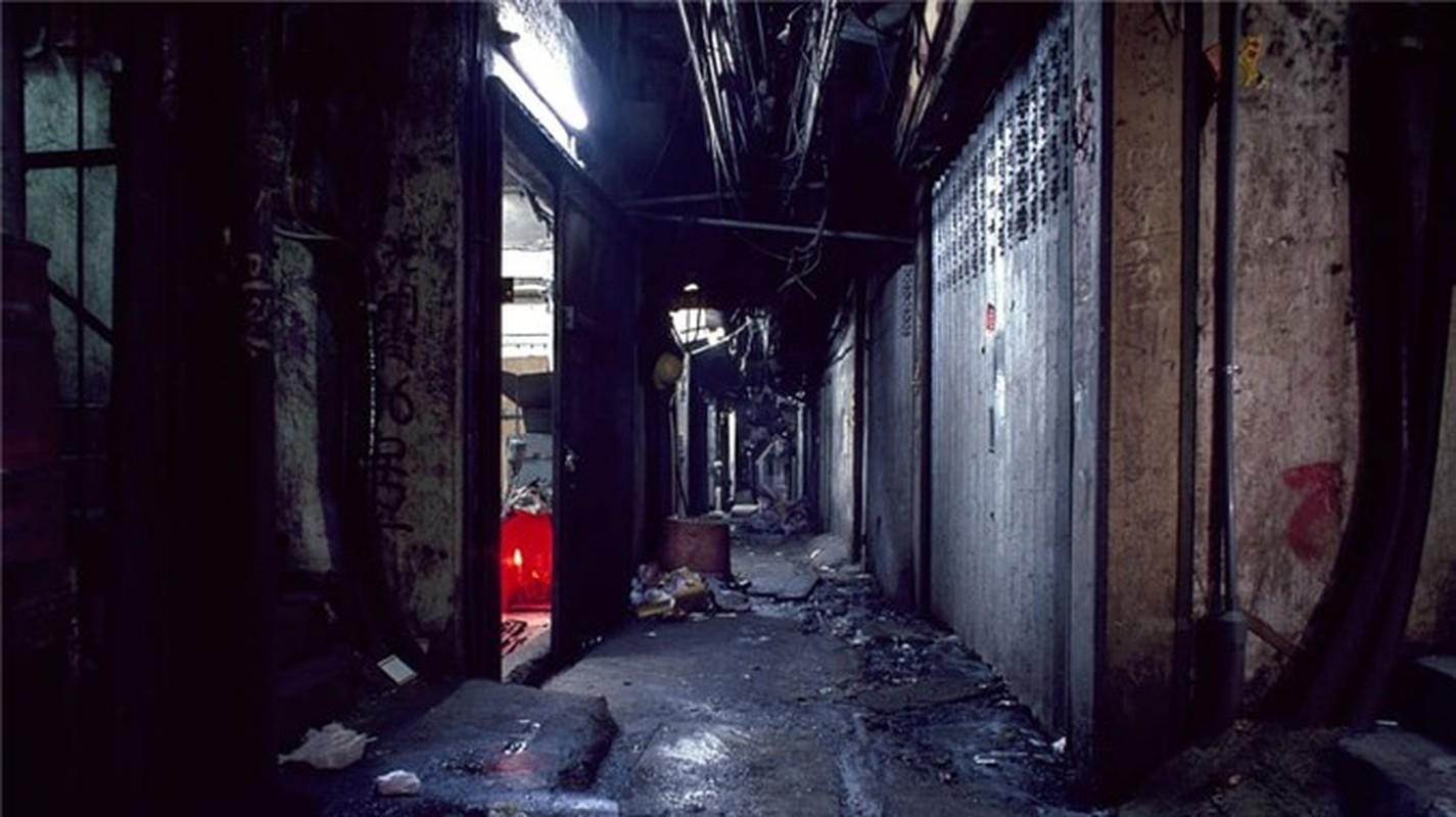 Can canh khu o chuot khung khiep nhat Hong Kong-Hinh-5