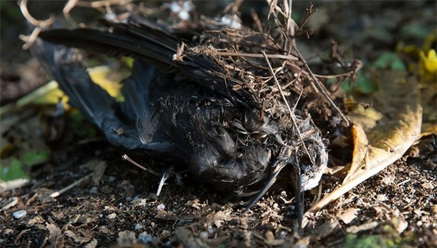 "Ky quai loai cay ""tu than"" giet chim trong tich tac-Hinh-5"