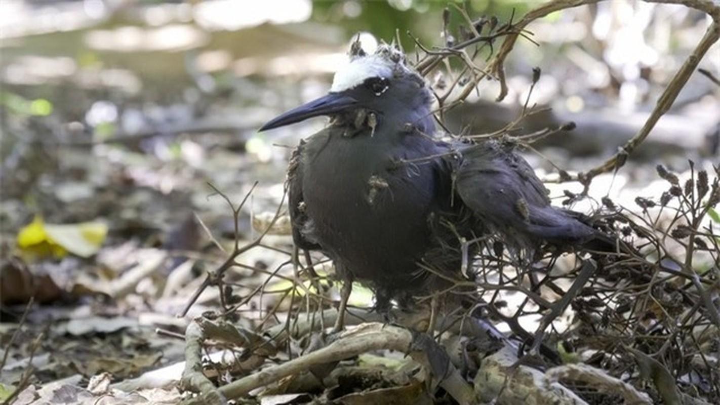 "Ky quai loai cay ""tu than"" giet chim trong tich tac-Hinh-8"
