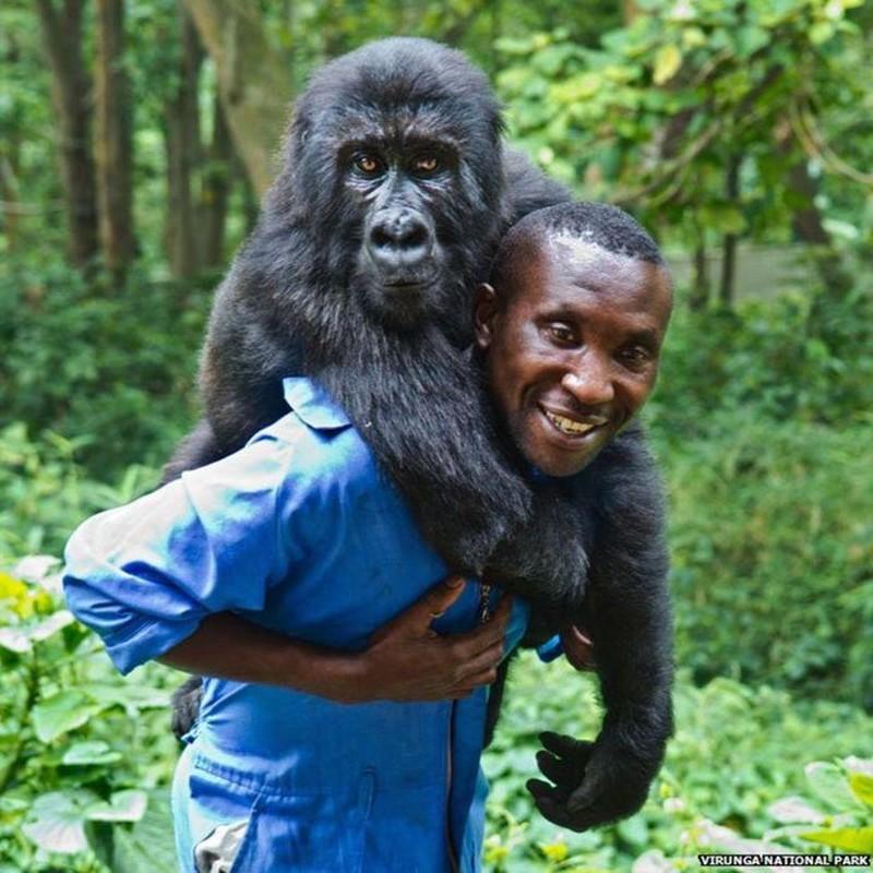 Con khi dot noi tieng vi selfie o Congo qua doi-Hinh-6