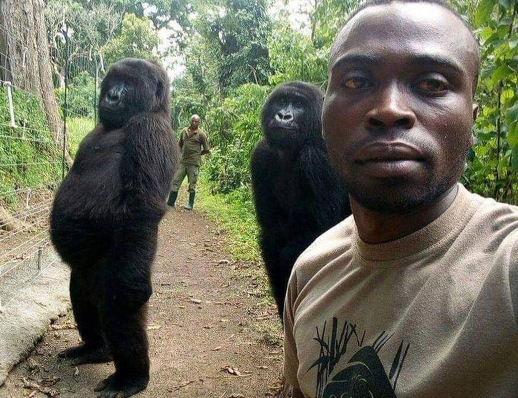 Con khi dot noi tieng vi selfie o Congo qua doi