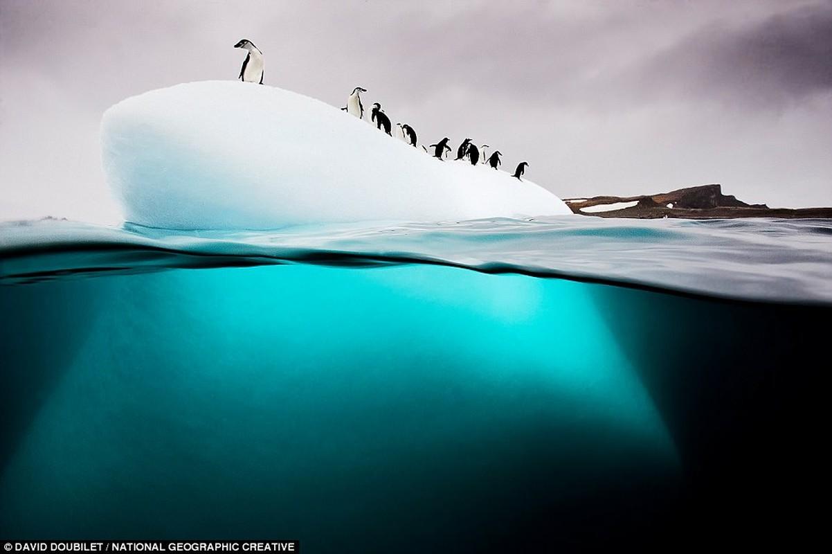 Nam Cực: chim cánh cụt Gentoo khám phá một tảng băng trôi trên Đảo Nam Georgia ở Nam Cực. National Geographic cho biết chuyến đi mùa đông đến đảo có nghĩa là bạn có thể nhìn thấy loài chim trong môi trường sống tự nhiên của chúng