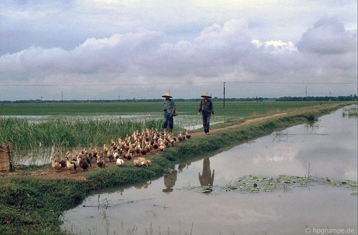 Hinh anh kho quen ve nong thon Ha Noi nam 1991-Hinh-2