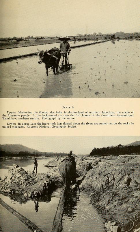 La lung xu Dong Duong nam 1944 qua sach anh cua My-Hinh-5