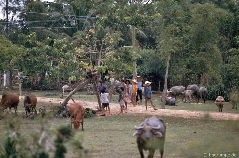 """Anh """"dep ngat"""" ve nhung chu trau o Viet Nam nam 1992 (ky 2)-Hinh-10"""