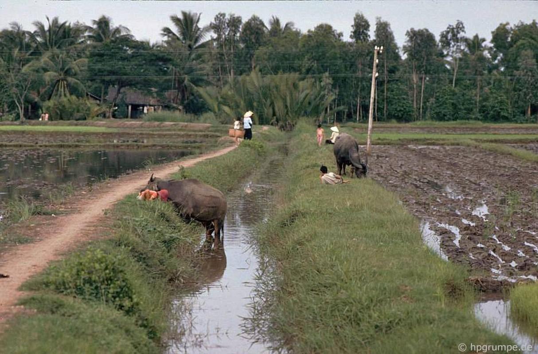 """Anh """"dep ngat"""" ve nhung chu trau o Viet Nam nam 1992 (ky 2)-Hinh-11"""