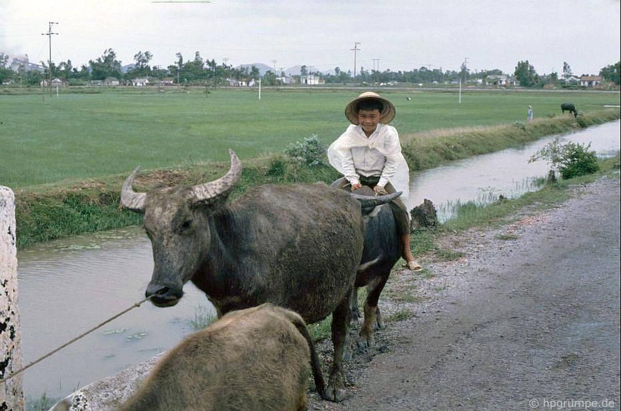 """Anh """"dep ngat"""" ve nhung chu trau o Viet Nam nam 1992 (ky 2)-Hinh-2"""