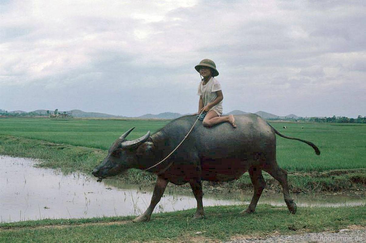 """Anh """"dep ngat"""" ve nhung chu trau o Viet Nam nam 1992 (ky 2)-Hinh-3"""
