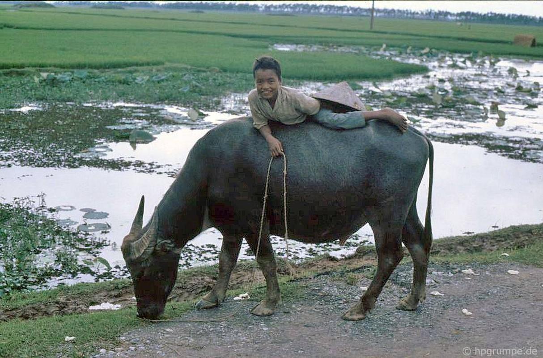 """Anh """"dep ngat"""" ve nhung chu trau o Viet Nam nam 1992 (ky 2)-Hinh-4"""