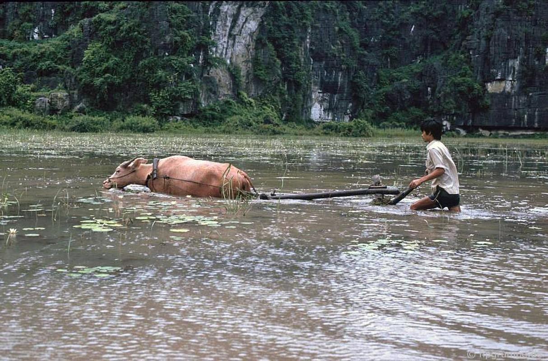 """Anh """"dep ngat"""" ve nhung chu trau o Viet Nam nam 1992 (ky 2)-Hinh-5"""