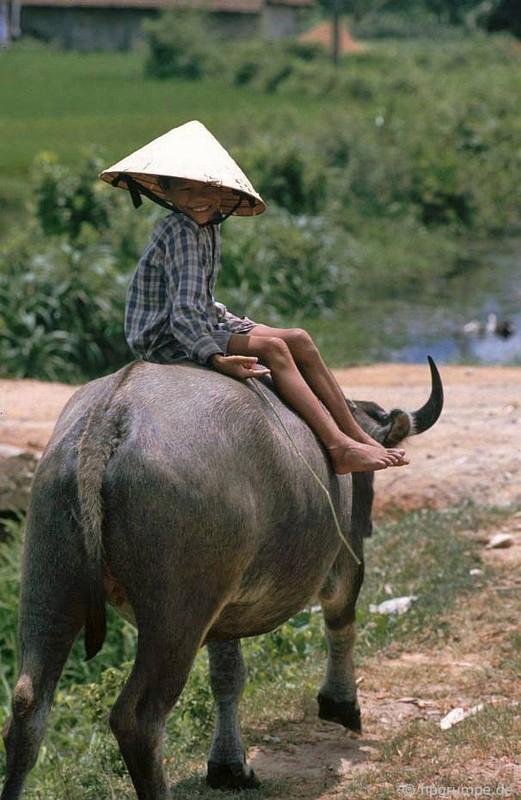 """Anh """"dep ngat"""" ve nhung chu trau o Viet Nam nam 1992 (ky 2)-Hinh-6"""
