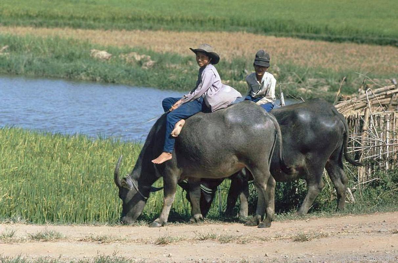 """Anh """"dep ngat"""" ve nhung chu trau o Viet Nam nam 1992 (ky 2)-Hinh-7"""