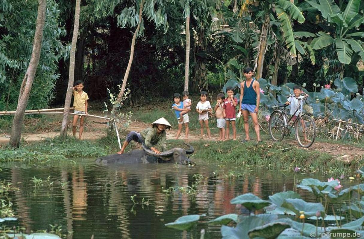 """Anh """"dep ngat"""" ve nhung chu trau o Viet Nam nam 1992 (ky 2)-Hinh-8"""