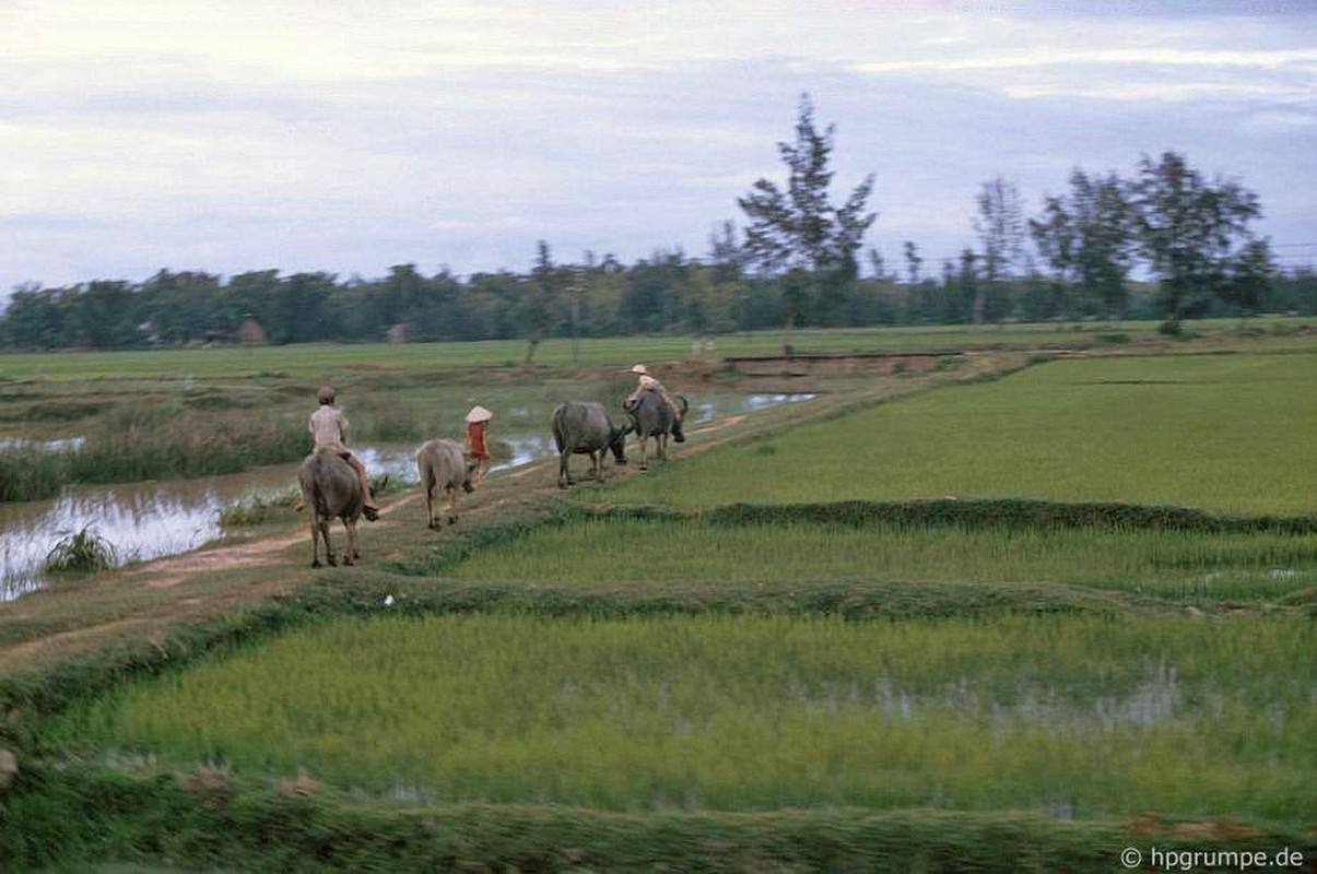 """Anh """"dep ngat"""" ve nhung chu trau o Viet Nam nam 1992 (ky 2)-Hinh-9"""