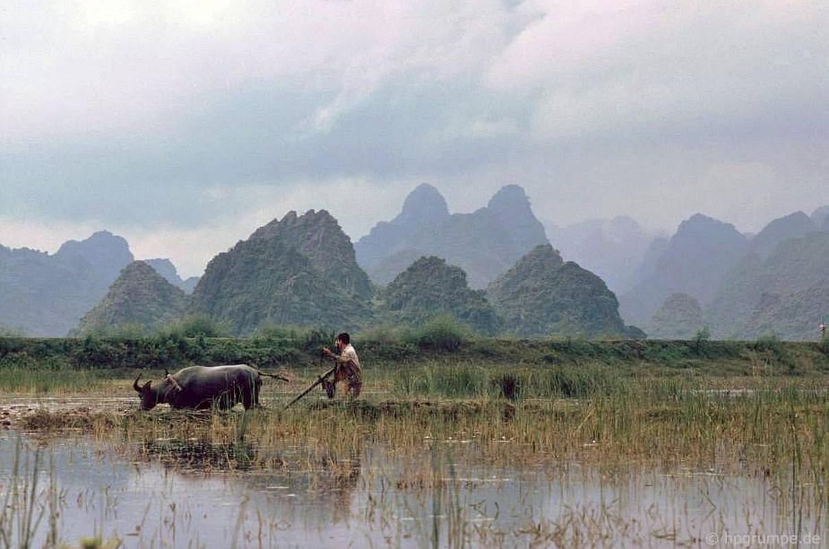 """Anh """"dep ngat"""" ve nhung chu trau o Viet Nam nam 1992 (ky 2)"""
