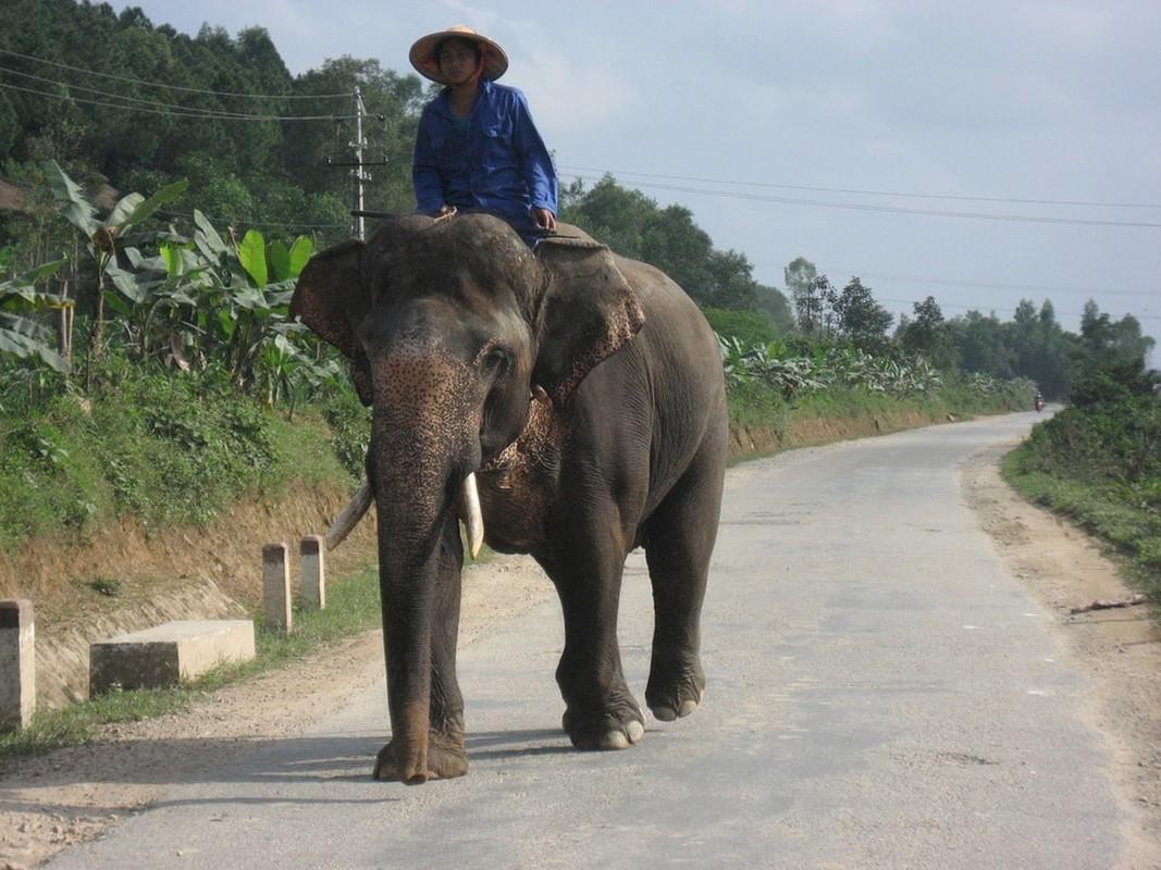 11 loai vat bao Tay diem ten phai ngam o Viet Nam-Hinh-4