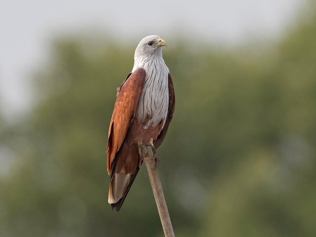 Diem danh nhung loai chim san moi dung manh nhat Viet Nam-Hinh-4
