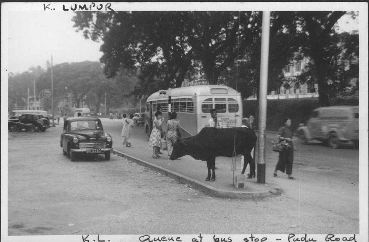 Khung canh trang le o thu do Malaysia nam 1961-1962-Hinh-4