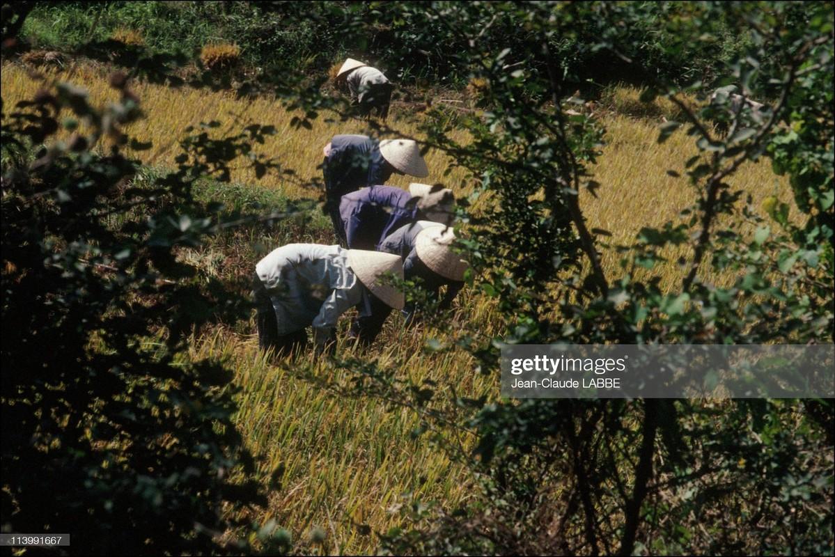 Ngam loat anh sieu doc la ve ba mien Viet Nam nam 1994-Hinh-13