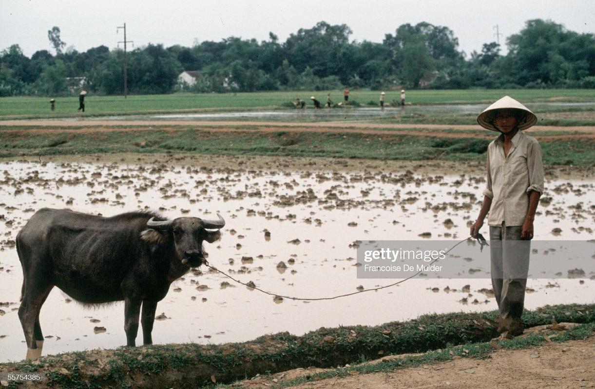 Boi hoi ngam cuoc song o thanh pho Vinh nam 1989-Hinh-6