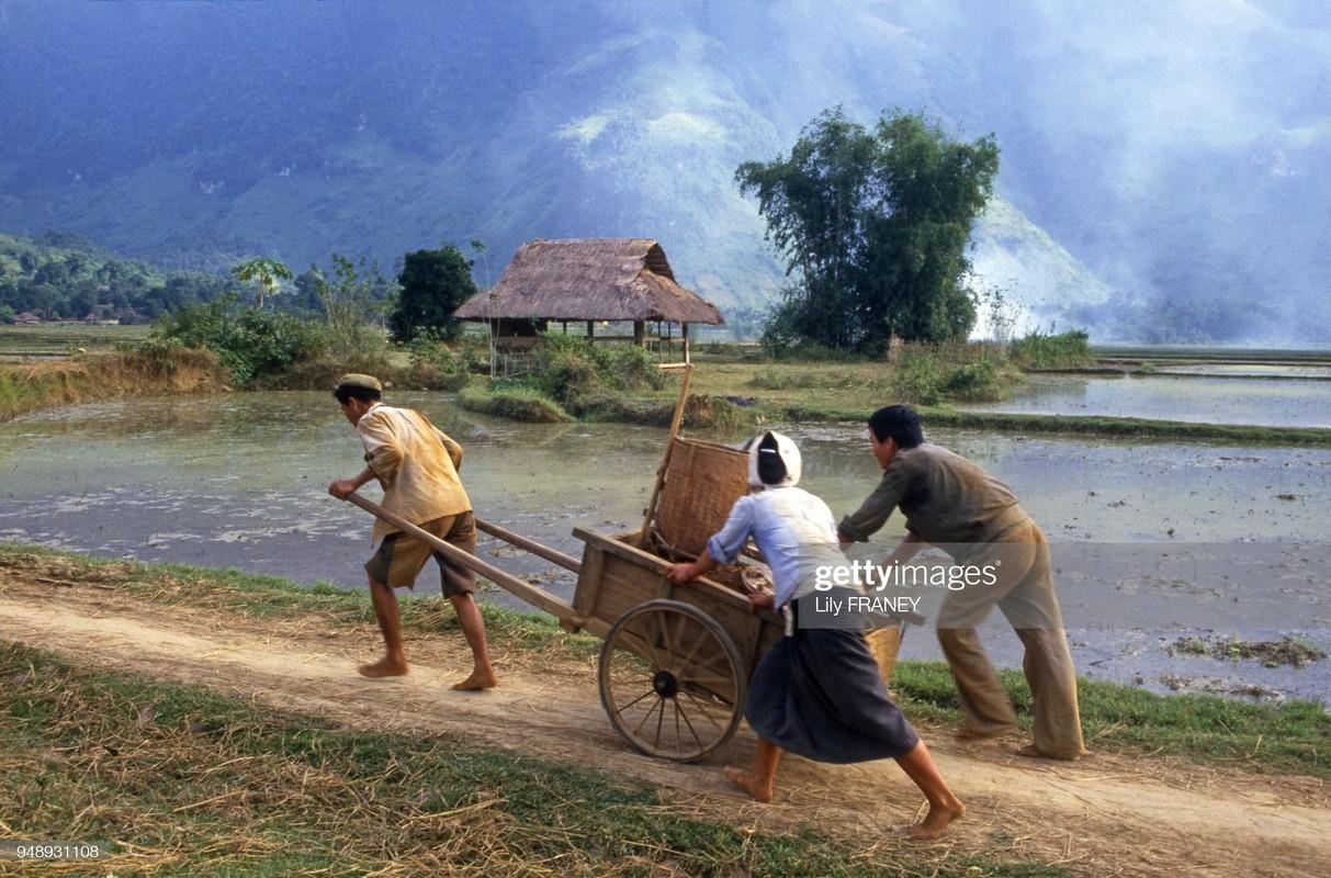 Khung canh thanh binh cua dong que Viet Nam nam 1987 (1)-Hinh-10