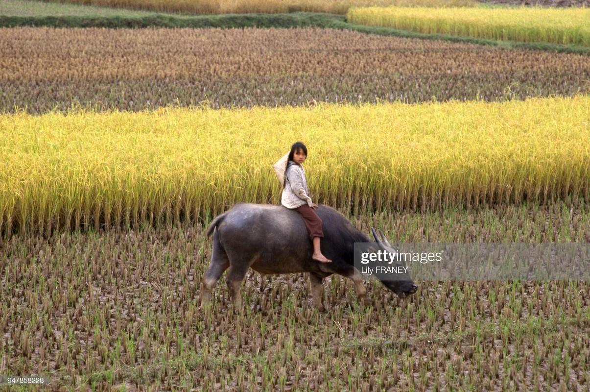 Khung canh thanh binh cua dong que Viet Nam nam 1987 (1)-Hinh-2