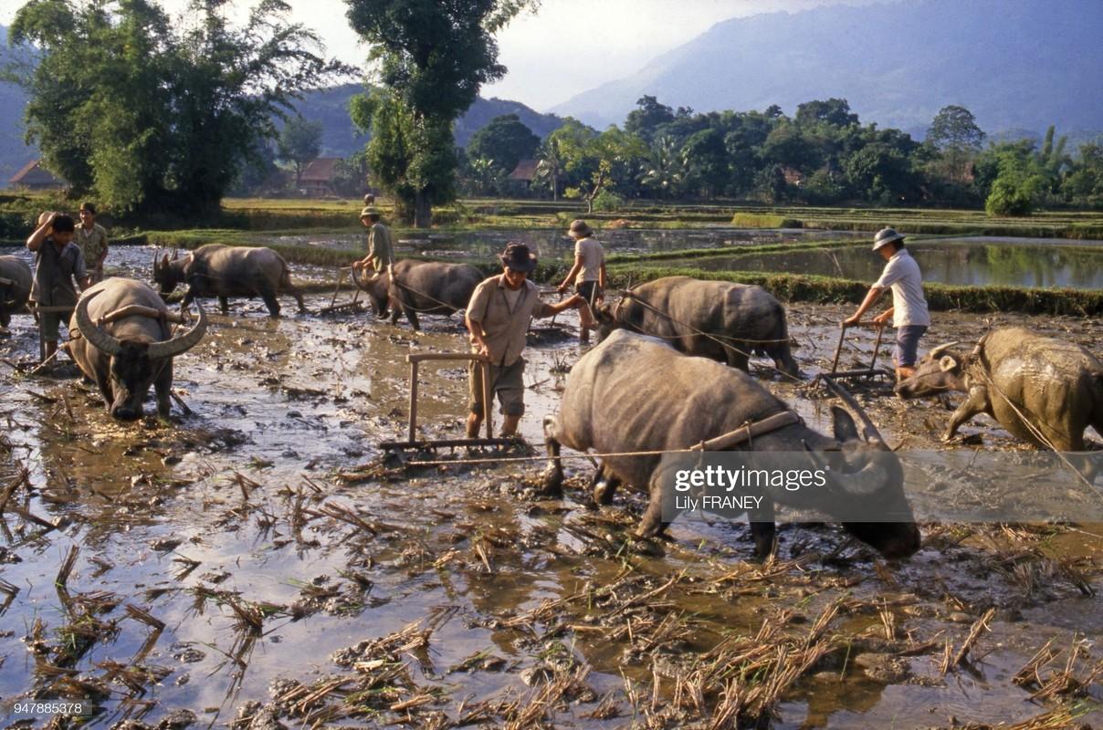 Khung canh thanh binh cua dong que Viet Nam nam 1987 (1)-Hinh-3