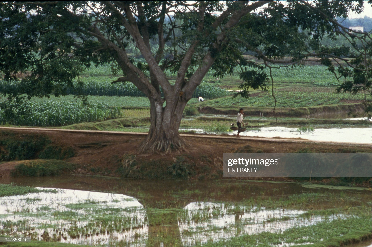 Khung canh thanh binh cua dong que Viet Nam nam 1987 (1)