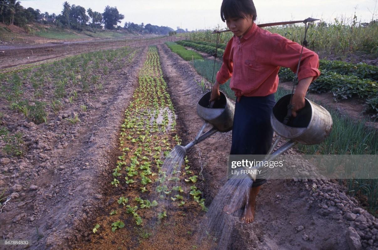Khung canh thanh binh cua dong que Viet Nam nam 1987 (2)-Hinh-6