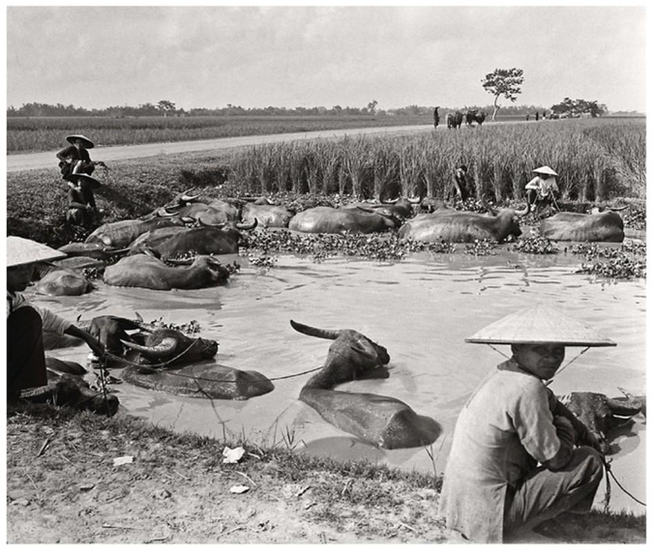 Anh quy hiem ve doi song cua nguoi Viet Nam 100 nam truoc-Hinh-9