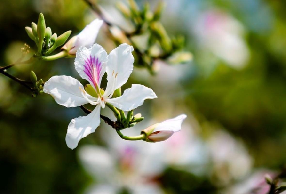 Nhung loai hoa bieu tuong o cac dia phuong-Hinh-3