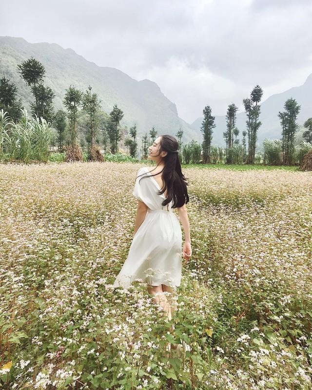 Nhung loai hoa bieu tuong o cac dia phuong-Hinh-6