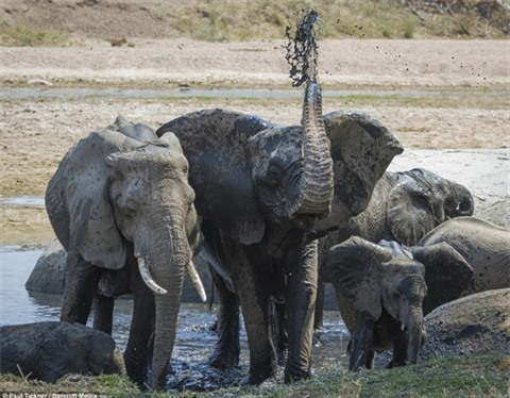 Hai con su tu doi quy quyet khien voi mat mang nhanh chong