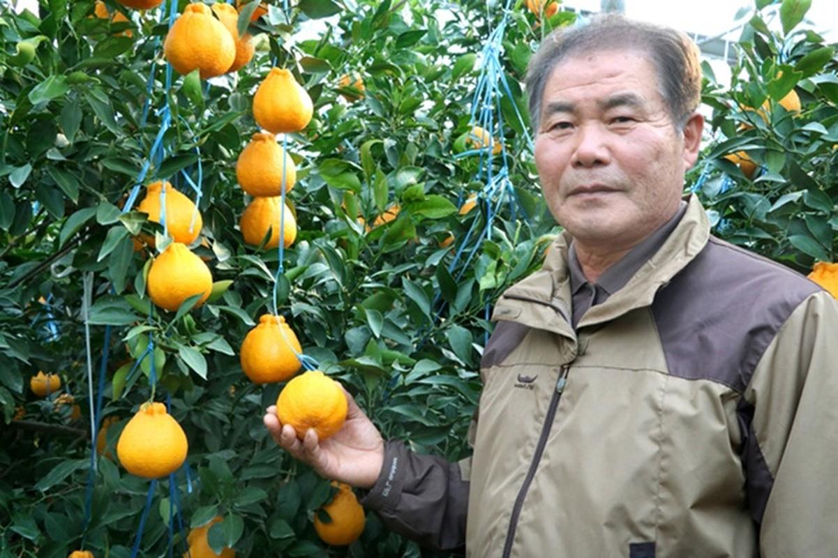 'Chum vang' triu canh, dac san lung lay ca nuoc, gan 1 trieu/kg-Hinh-5