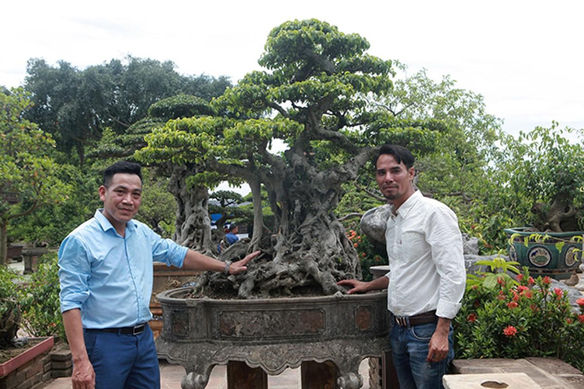 Cay sanh co gia 7 ty o Ha Noi khien dan choi to mo-Hinh-13
