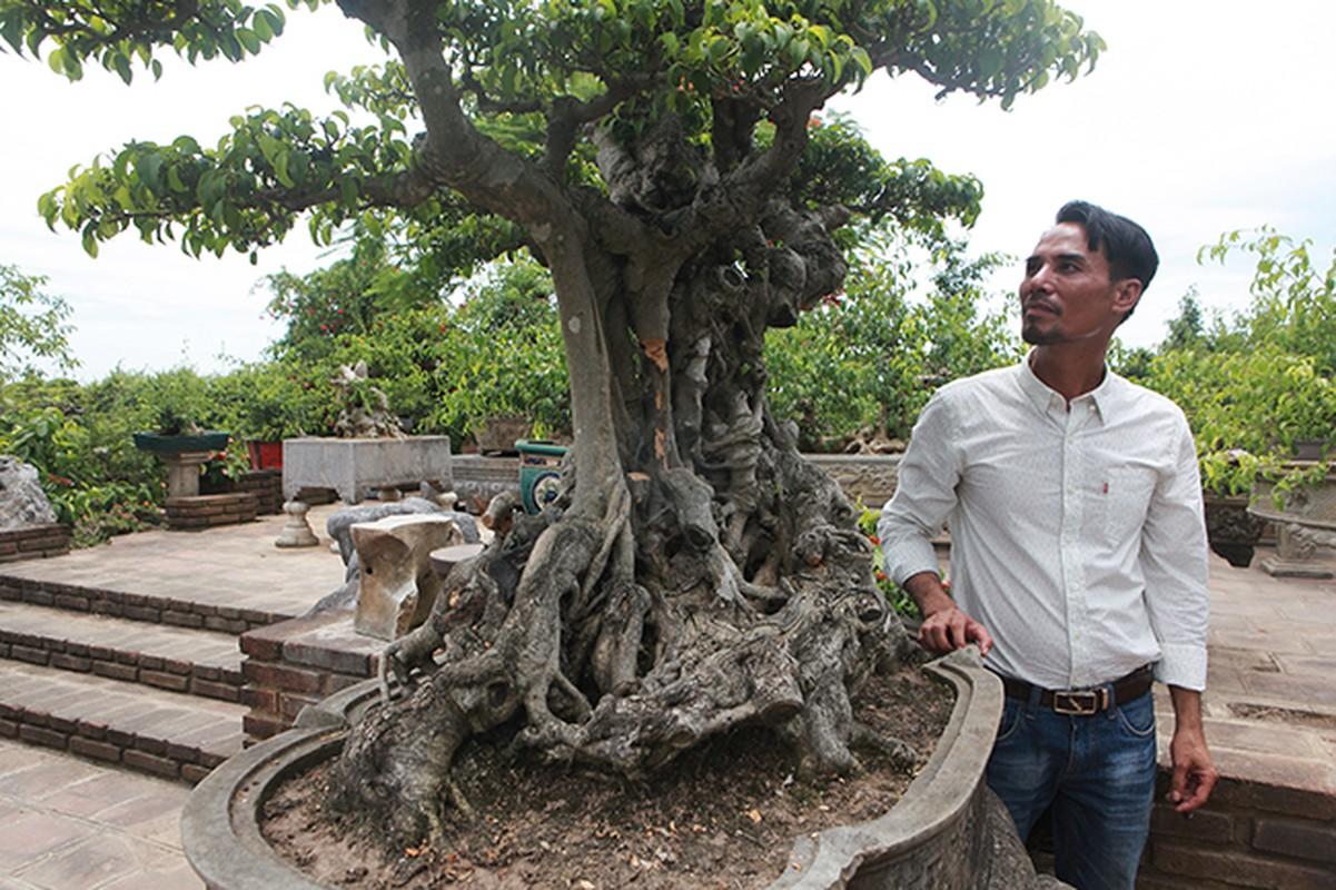 Cay sanh co gia 7 ty o Ha Noi khien dan choi to mo-Hinh-8
