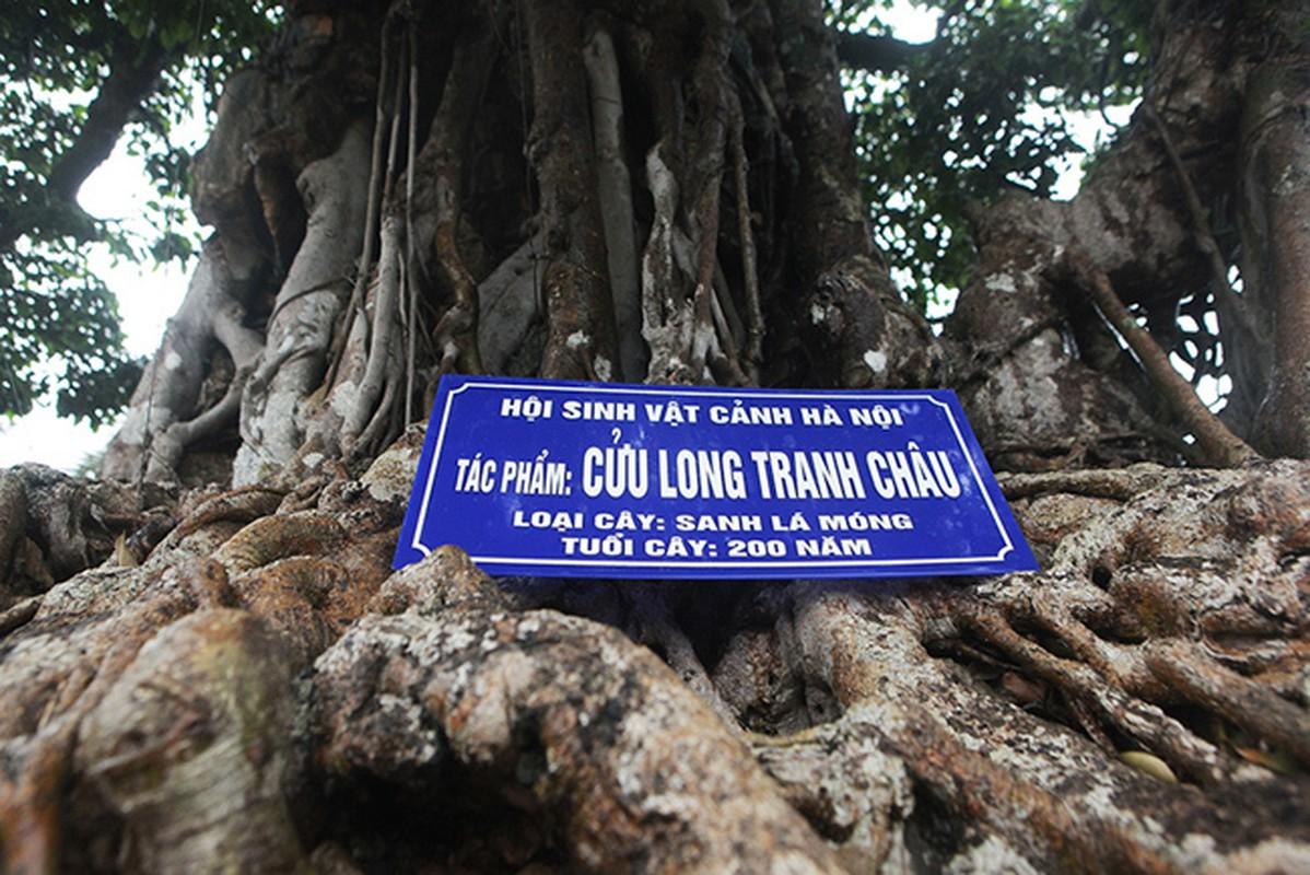 Dai gia Viet muon ghi danh cay sanh trieu do bao vat the gioi-Hinh-2