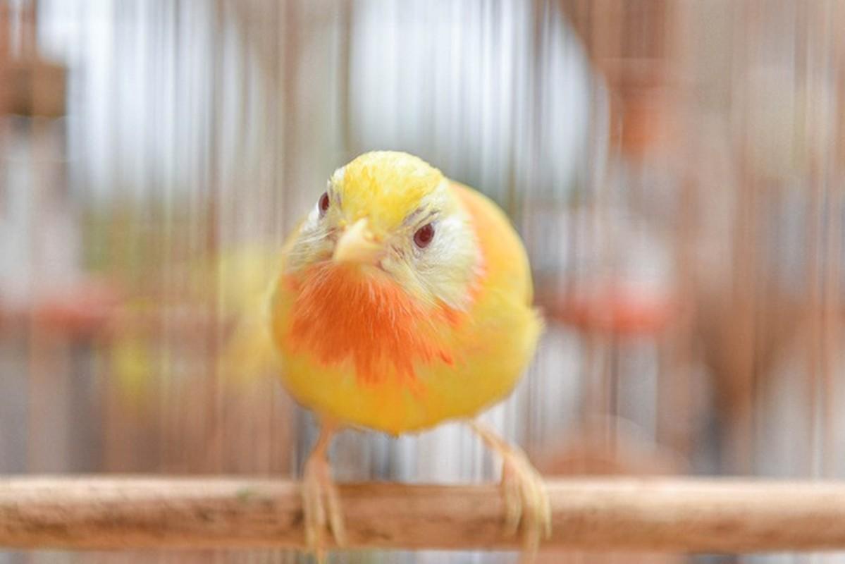 Dai gia cung khong mua noi chim ngu sac doc nhat Viet Nam-Hinh-5