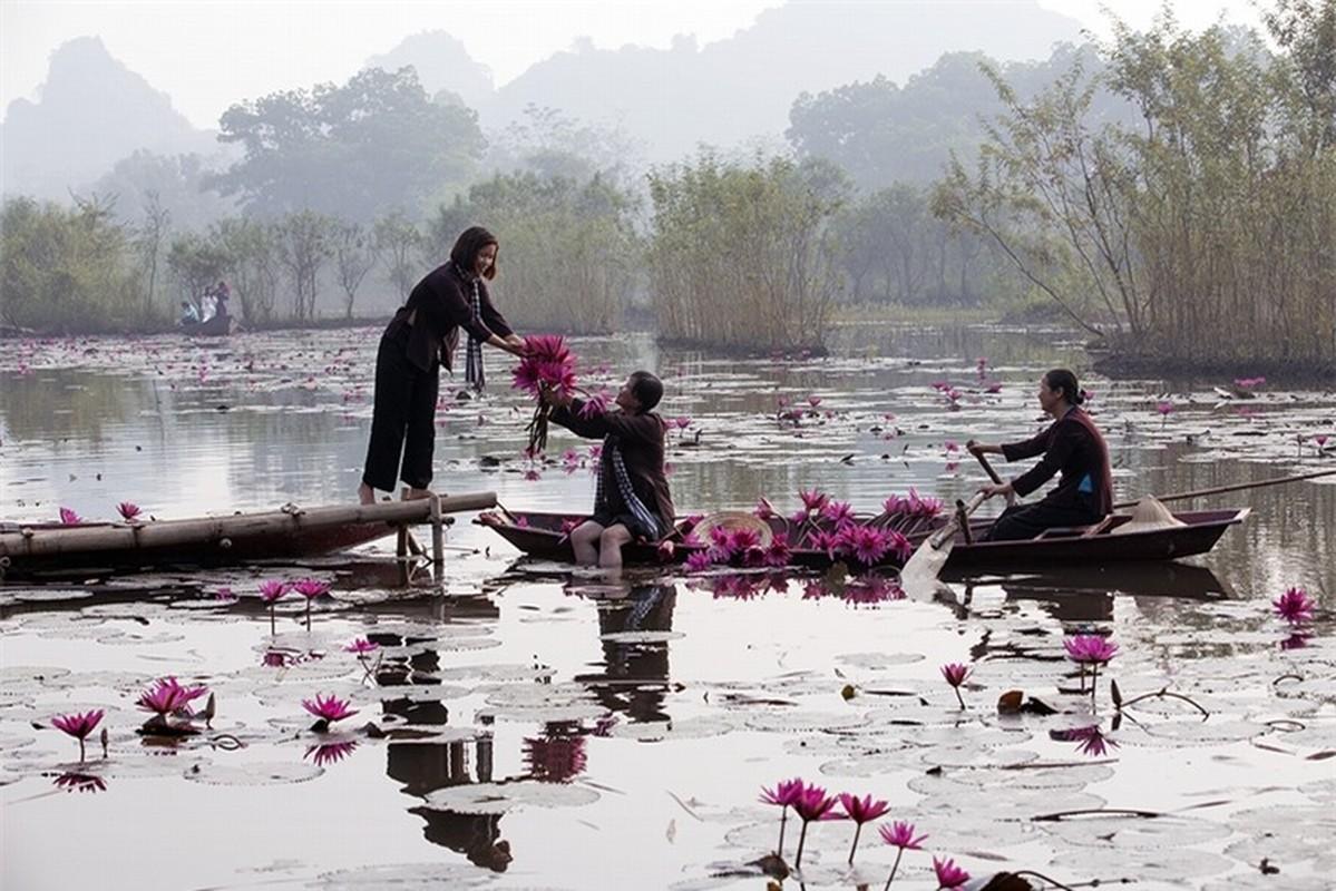 Ngat ngay voi sac tim mua hoa sung chua Huong-Hinh-6
