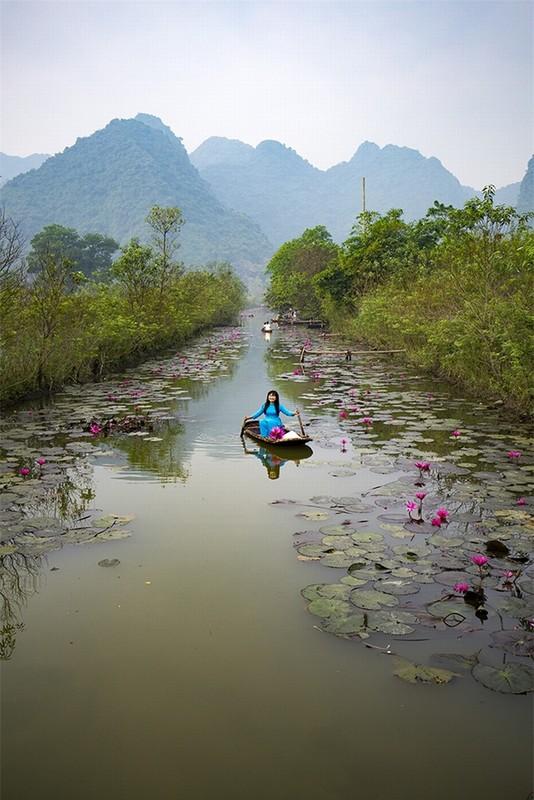 Ngat ngay voi sac tim mua hoa sung chua Huong-Hinh-8