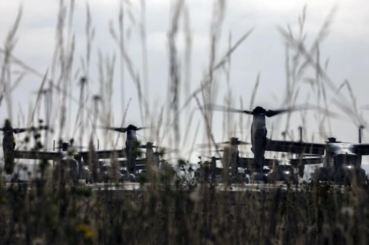 Truc thang lai sieu di V-22 Osprey xuat hien trong chien dich tieu diet Baghdadi?-Hinh-11