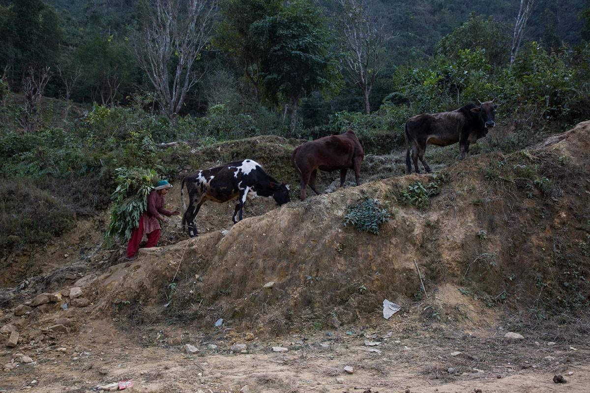 Cuoc song nguoi dan Nepal hai nam sau tham hoa dong dat-Hinh-7